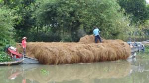 livraison-paille-de-riz-300x168